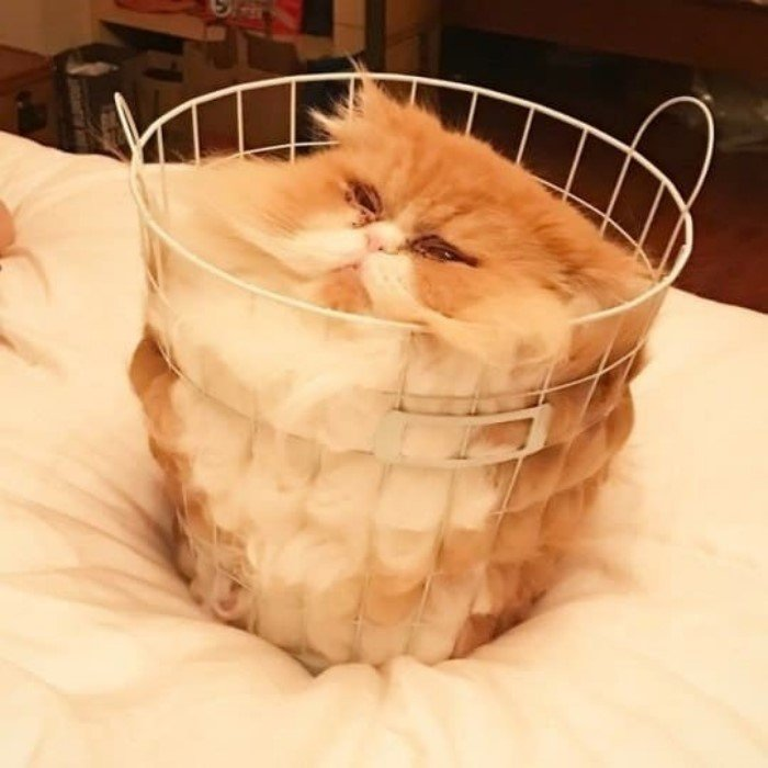 Смешные кошачьи фотографии
