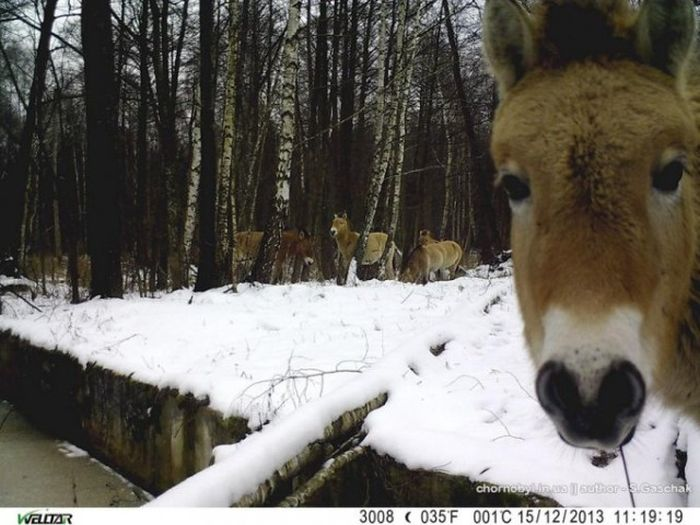 Животный мир в окрестностях Чернобыльской АЭС
