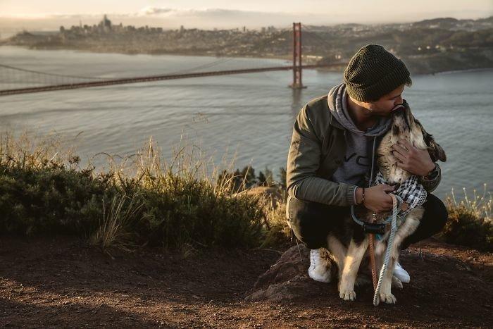 Первая встреча собак и их хозяев