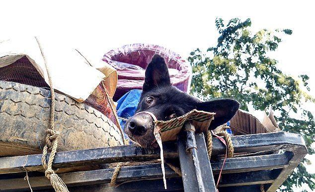 В Индии спасли собак, которых собирались пустить на мясо
