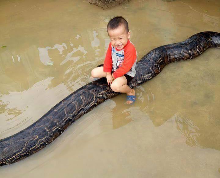 3-летний мальчик верхом на 6-метровом питоне
