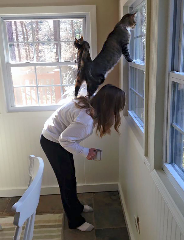 Домашние животные проказничают
