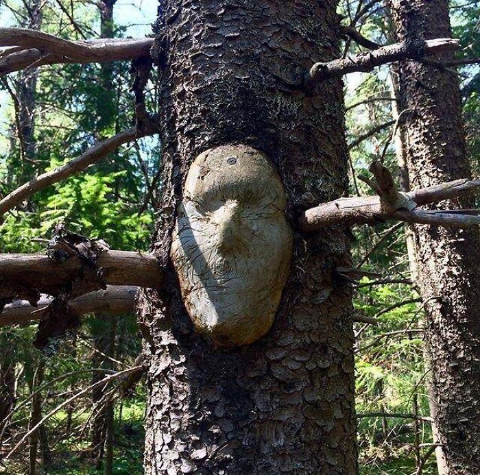 Деревья самой необычной формы