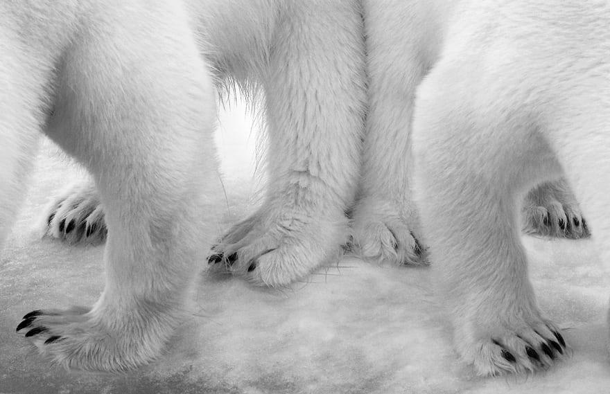 Победители фотоконкурса Wildlife Photographer of the Year 2017
