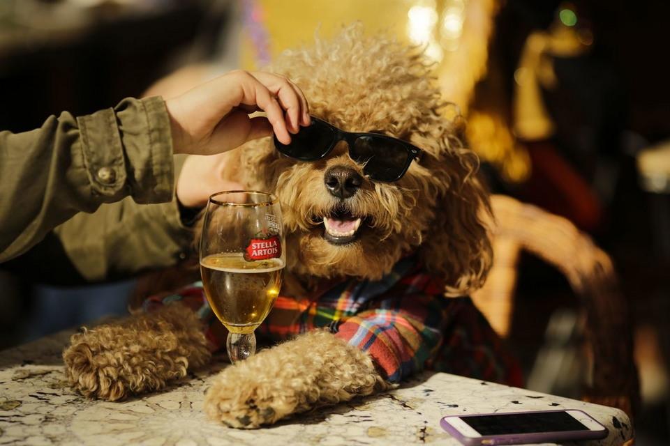 Парад собак в удивительных костюмах в Нью-Йорке