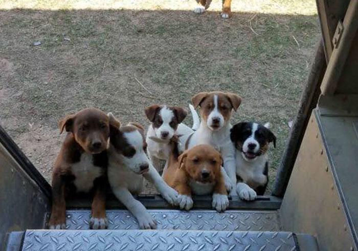 Собаки встречают почтальонов