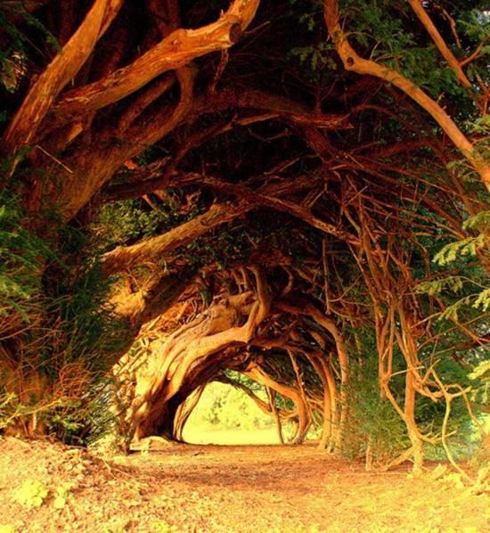 Самые красивые в мире тоннели из деревьев