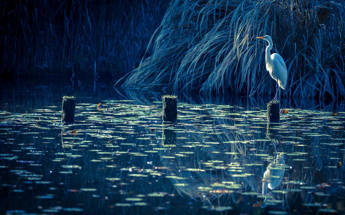 Красота природы Японии от Кунито Имаи