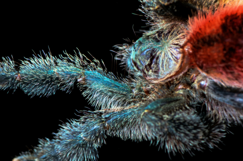 Макроснимки паучьих лап