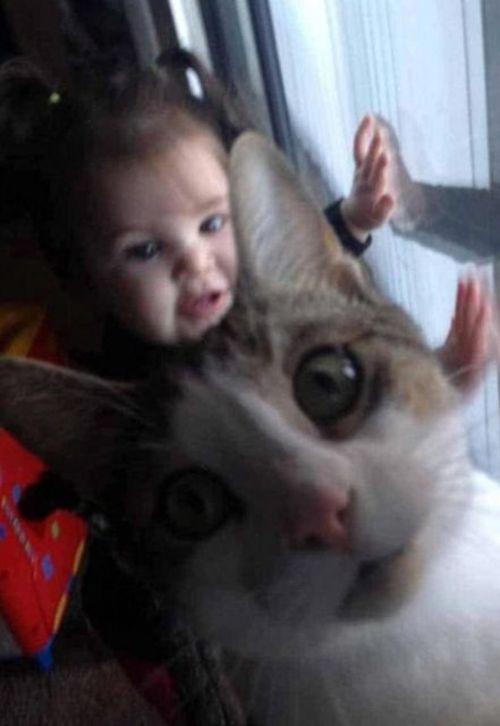 Коты нагло влезли в кадр
