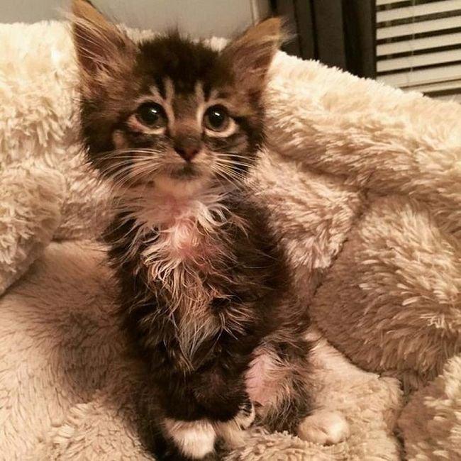 Прекрасная кошка, которая родилась без локтевых суставов