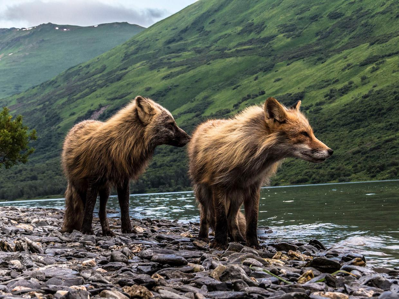 Лучшие фото природы с конкурса от National Geographic 2017