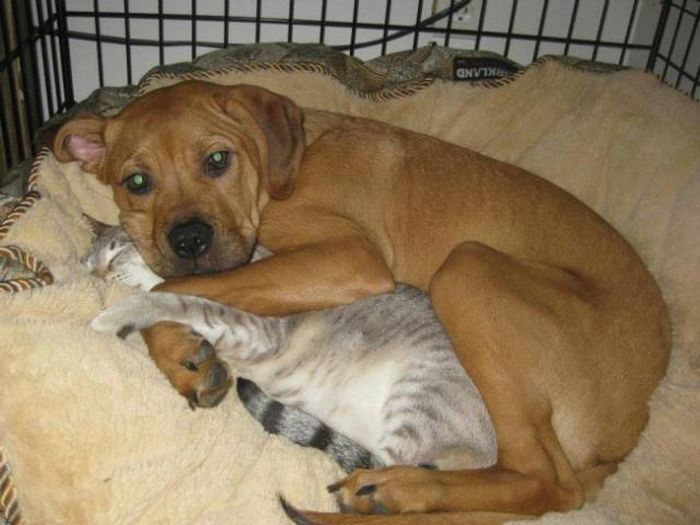 Снимки о совместной жизни кошек и собак