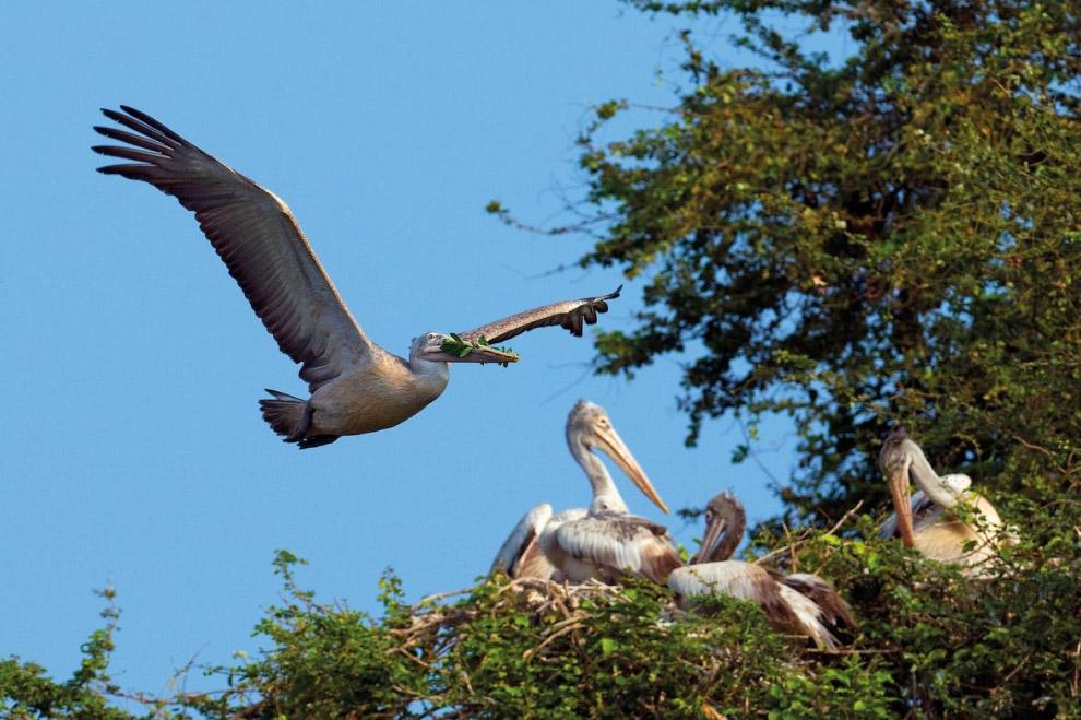 Дикая Индия от зоолога Акселя Гомиля