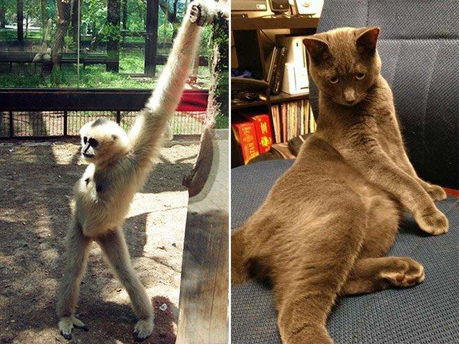 Животные выглядят сексуальнее, чем фотомодели