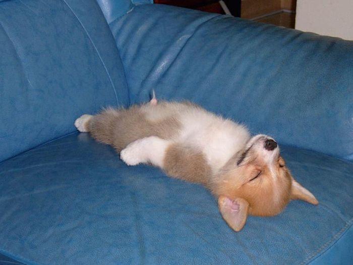 Забавные фото застывших собак