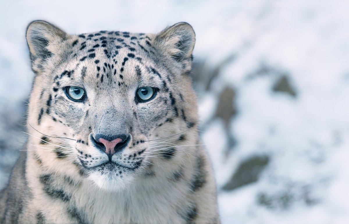 Животные под угрозой исчезновения от Тима Флача