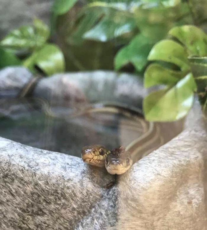 Фотографии с очаровательными и милыми змеями