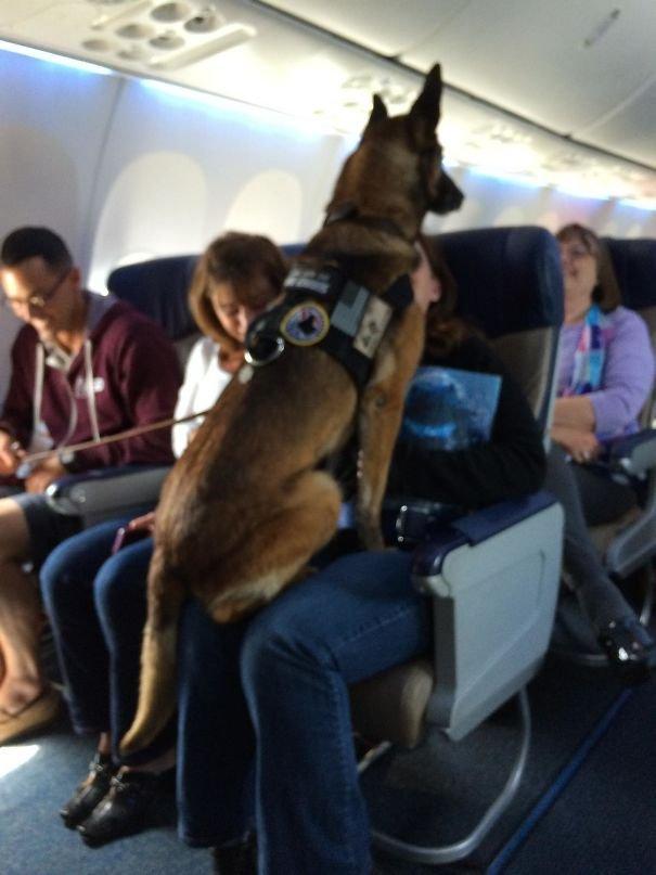 Домашние животные на борту самолёта