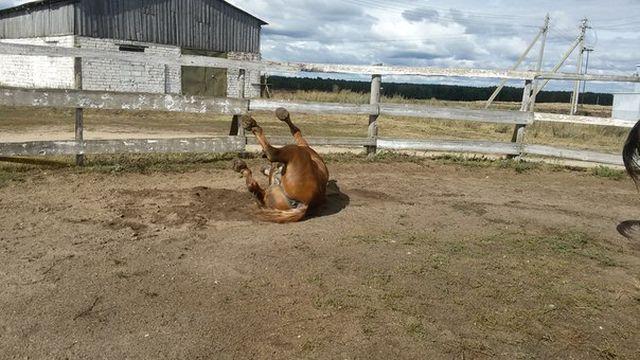 Конь-долгожитель по кличке Дед