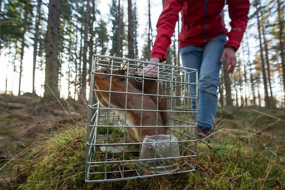 Победители конкурса фотографий дикой природы British Wildlife Photography Awards 2017