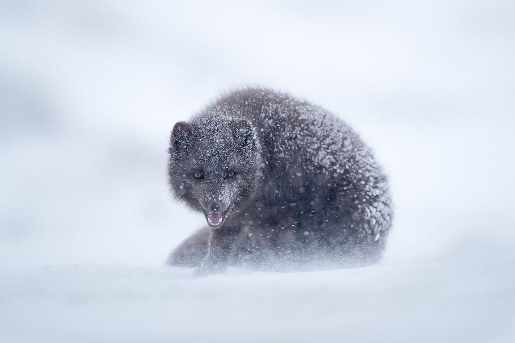 Лучшие фотографии ноября 2017 от National Geographic