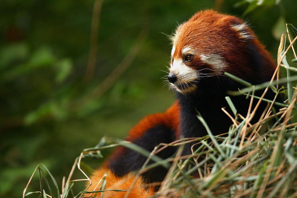 Резерваты гигантской панды в провинции Сычуань