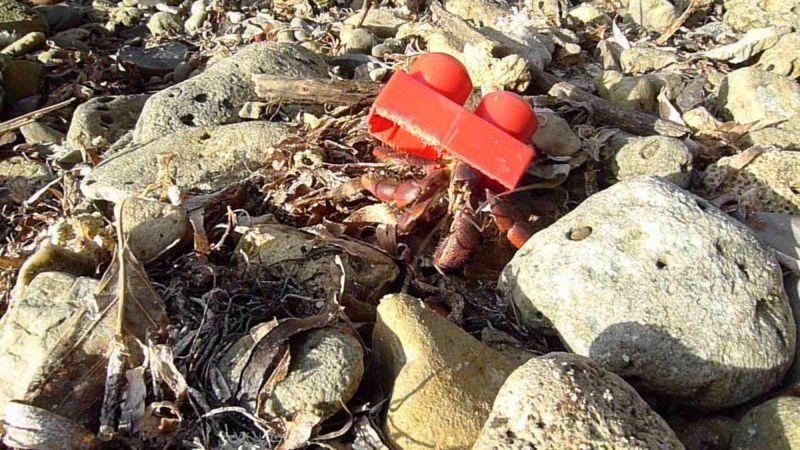 Пластиковые панцири раков-отшельников