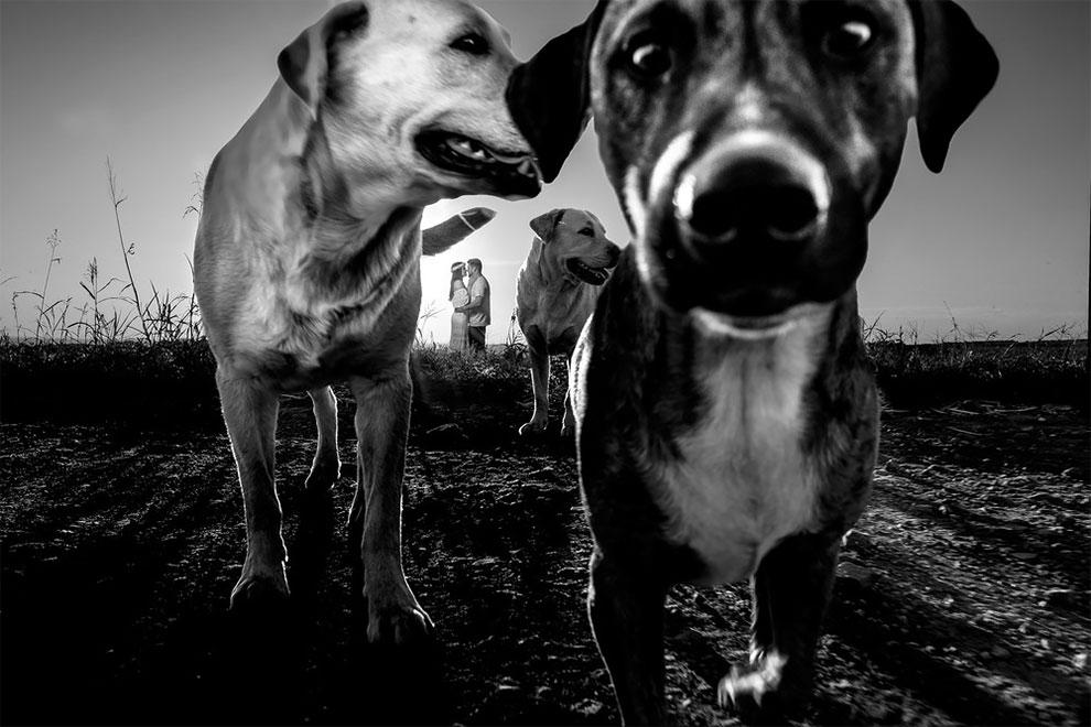 Животные фотобомбят свадебные снимки