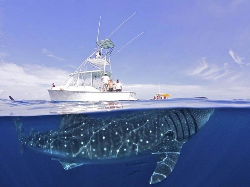 10 уникальных полуподводных фотографий