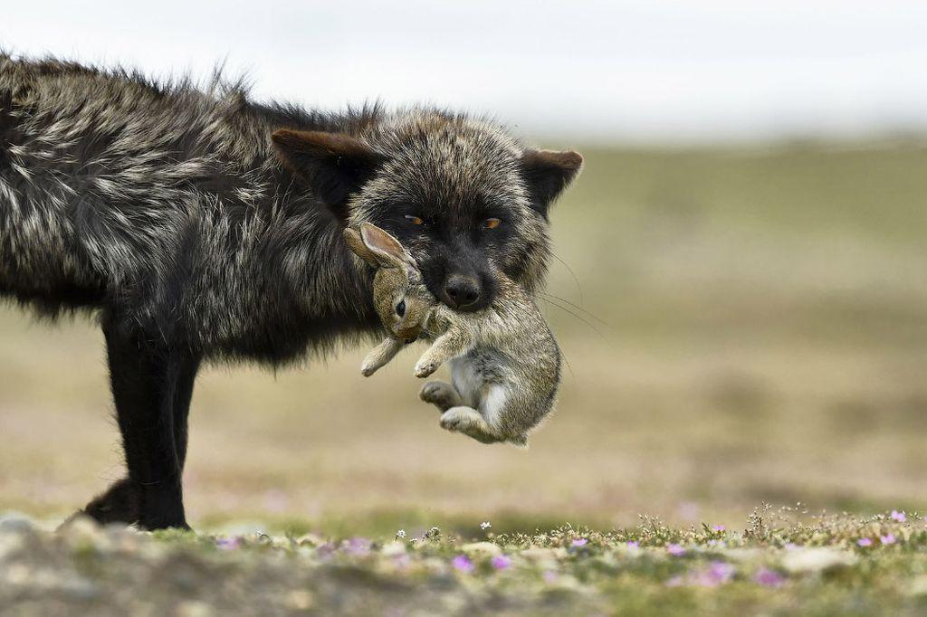 Финалисты конкурса Лучший фотограф природы — 2017 от National Geographic