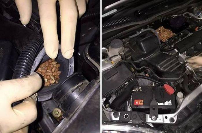 Необычные находки под капотами автомобилей