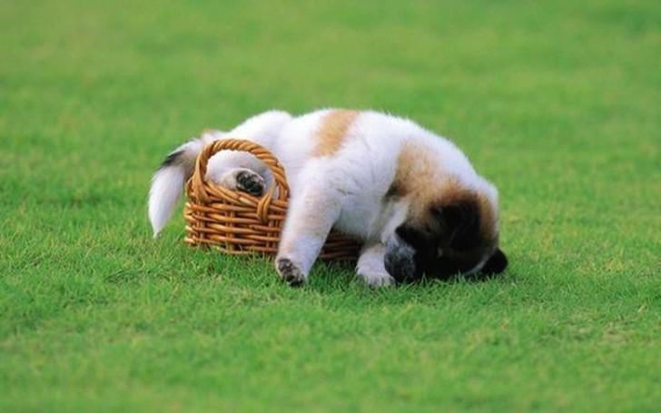 Нереально милые спящие щенки
