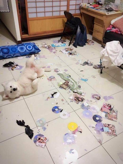 Непослушный пес уничтожил коллекцию порно своего хозяина