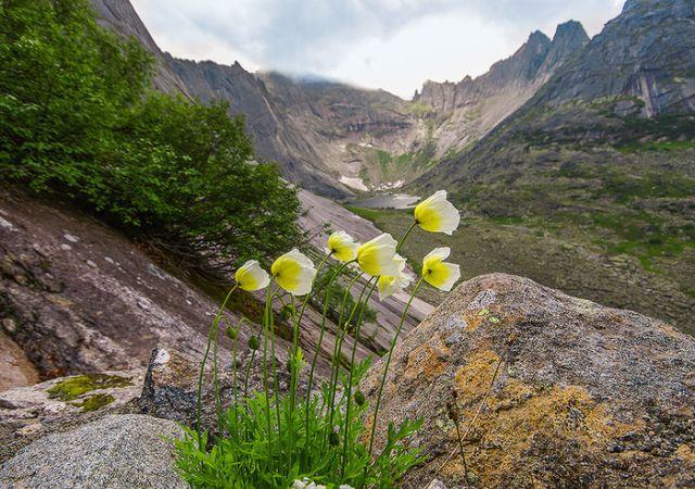 Сказочная красота природы в парке Ергаки