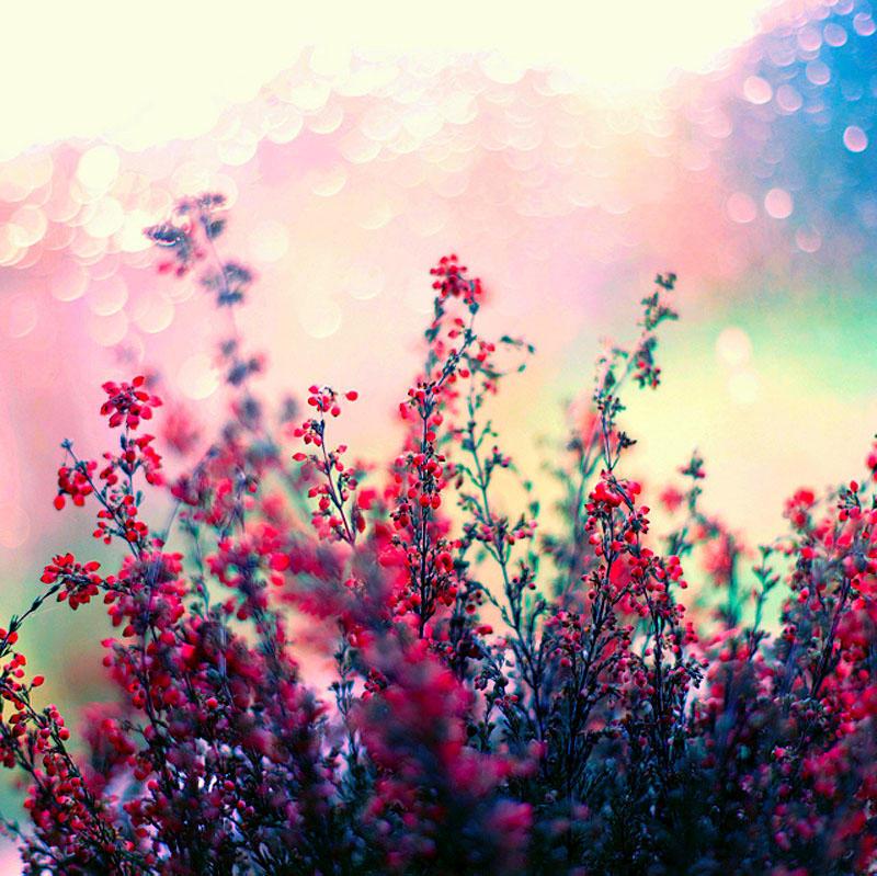 Цветы от польской фотохудожницы Барбары Флорчик