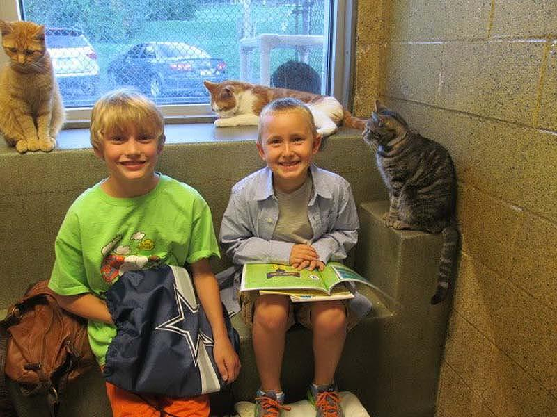 Кошки помогают детям развить навыки чтения