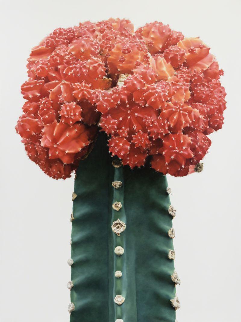 Гиперреалистичные рисунки кактусов от корейского художника Ли Кван-хо