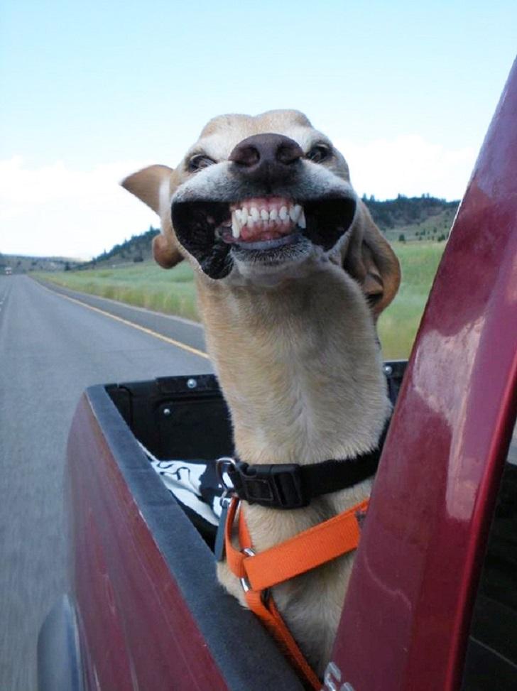 Эти собаки любят, когда в лицо бьет ветер