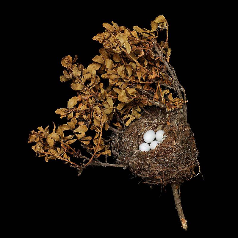 Птичьи гнезда как шедевры природной архитектуры