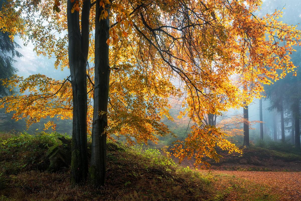 Задумчивый лес на снимках Хейко Герлихера
