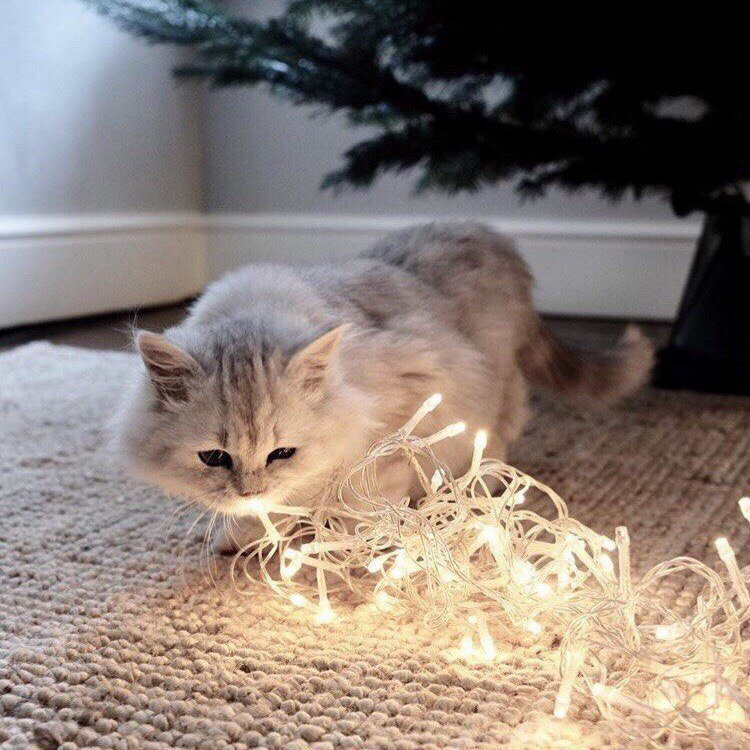 Новогодние коты: к празднику готовы