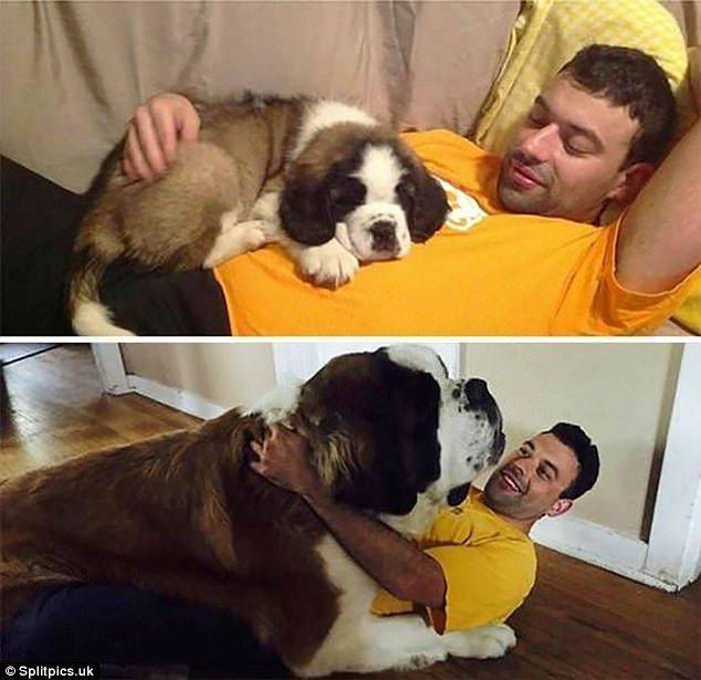 Очаровательные фото повзрослевших собак: до и после