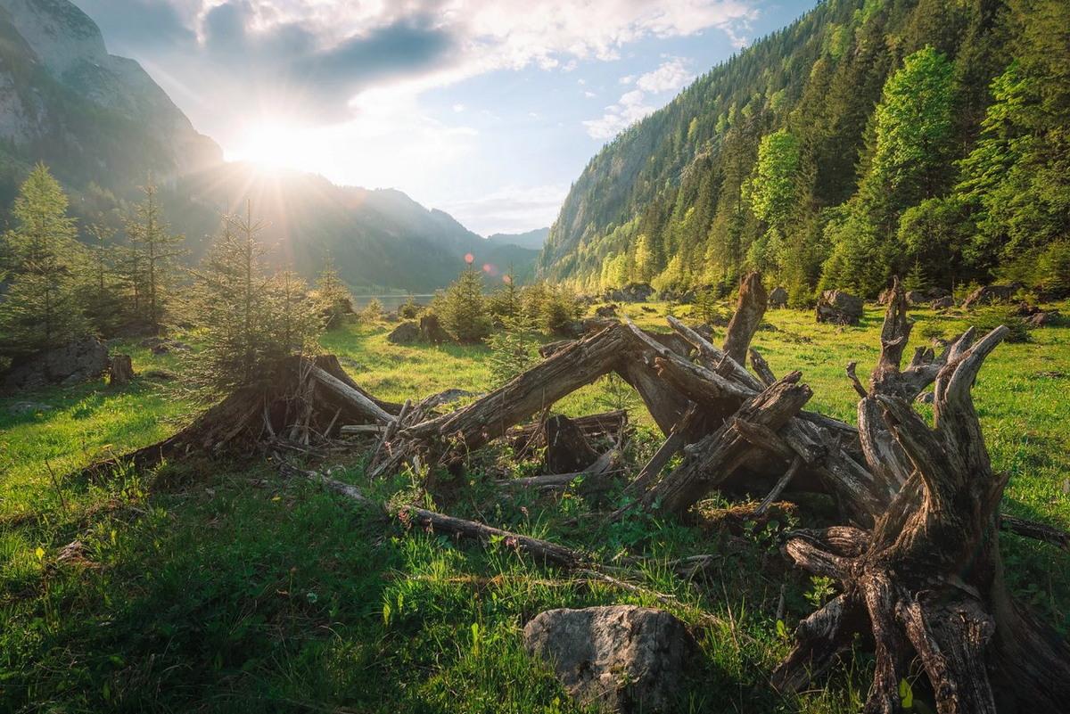 Замечательные снимки природы от Martin Kornmesser