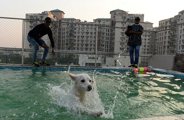 Собачий отель класса люкс в Индии