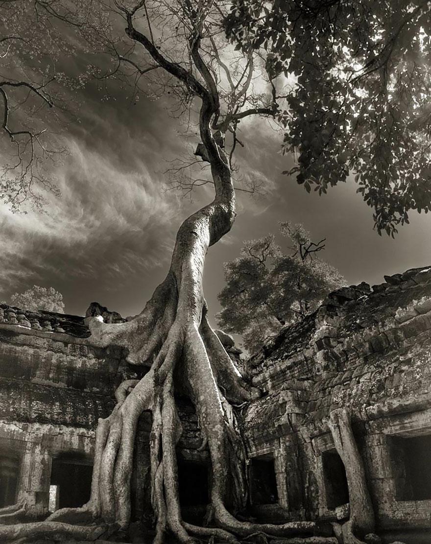 Старейшие деревья в мире от Бет Мун