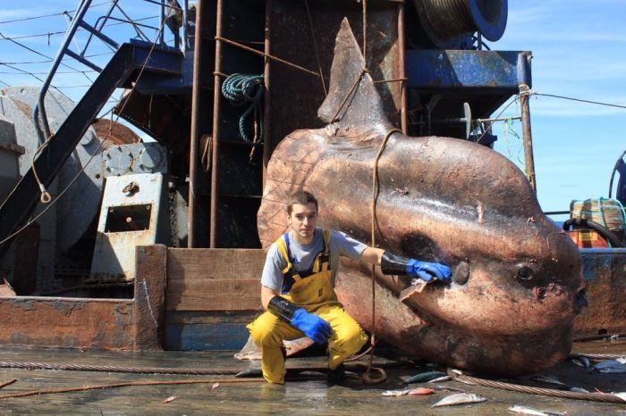 Жуткие существа, попавшие в сети рыбаков