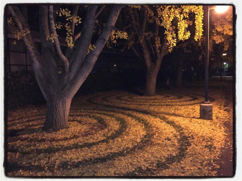Узоры из опавших листьев от сотрудницы университета