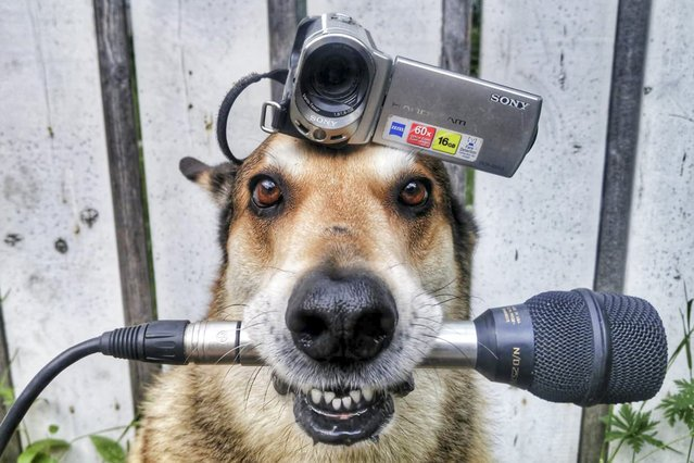 Пёс Тоби умеет удерживать на голове практически всё