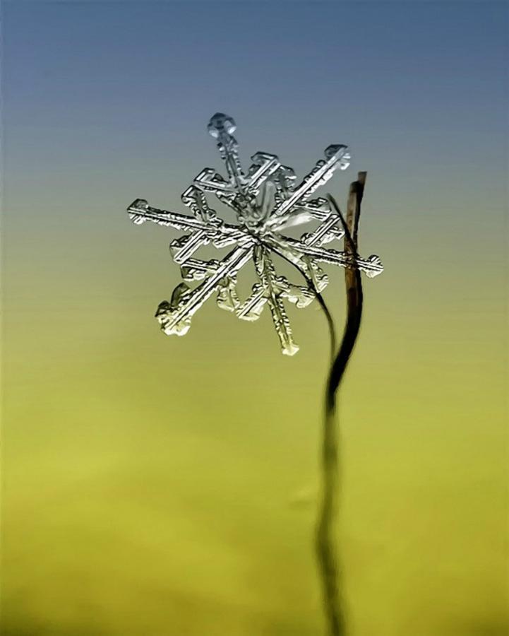 Снежинки от Андрея Осокина